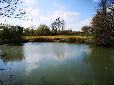 Beech Pond